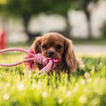 Zoom sur le pet-sitting
