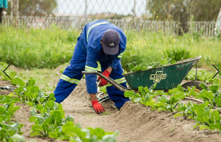 Jardinier qui désherbe un jardin
